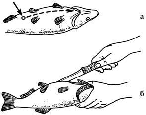 Правильное копчение и вяление рыбы fb2