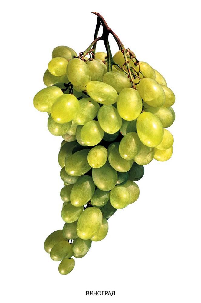 Можно ли давать годовалому ребенку виноград