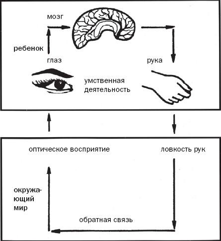 Схема 2. Соотношение функций зрения и мелкой моторики Между мелкой моторикой и умственной деятельностьюв Таблице...