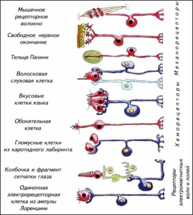 Происхождение мозга (fb2) |
