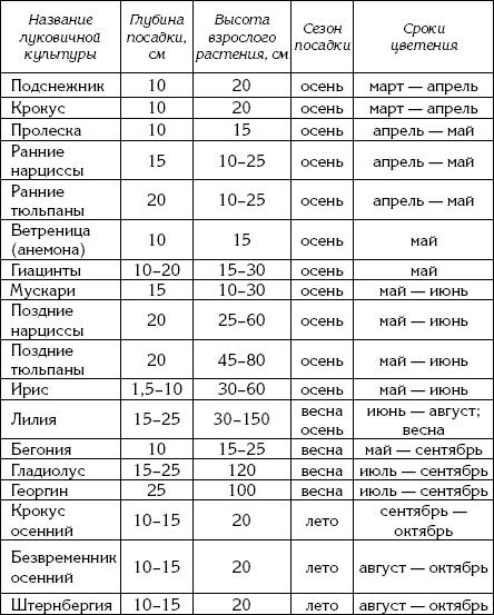 Классификация луковичных