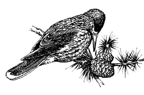 Лит.: Птицы Советского Союза,