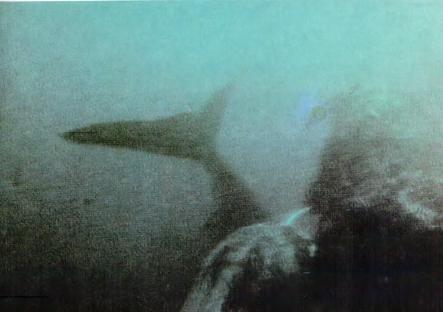 волосатый язык кита: