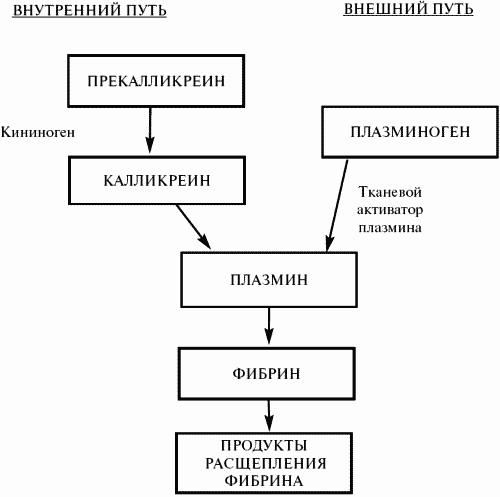 Заболевания крови (fb2) |