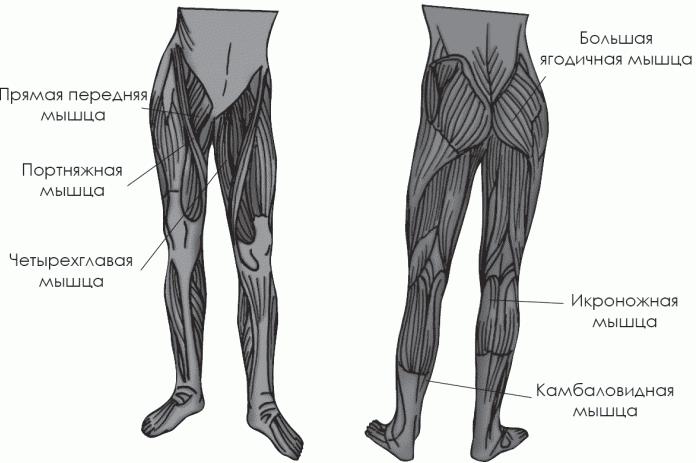 Имея тренированные мышцы ног,