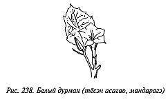 http://lib.rus.ec/i/67/346167/_238.jpg