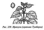 http://lib.rus.ec/i/67/346167/_239.jpg