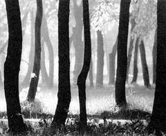 """Вот еще один пример усложненного ритмического решения пейзажного снимка - фото 61 (О. Мартынов  """"Лес, освещенный..."""