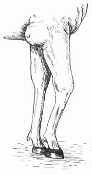 Причиной бурсита, или воспаления синовиальных сумок (бурс - замкнутый...
