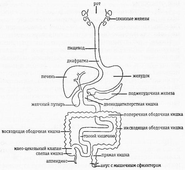 жиры, углеводы и белки.