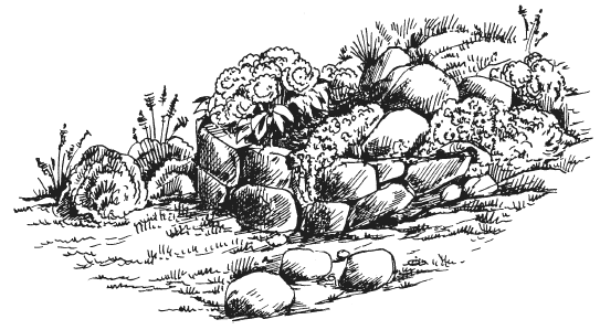 Рокарий, подпорная стенка