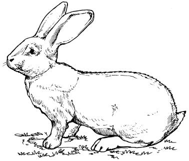 Порой у кроликов имеются и