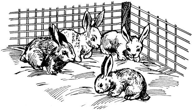 Кролики (fb2) | Либрусек