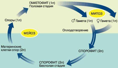Биология. Общая биология.