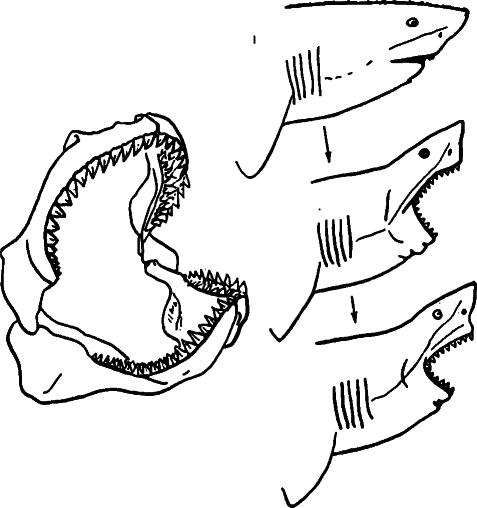 Акулы: Мифы и реальность (fb2)