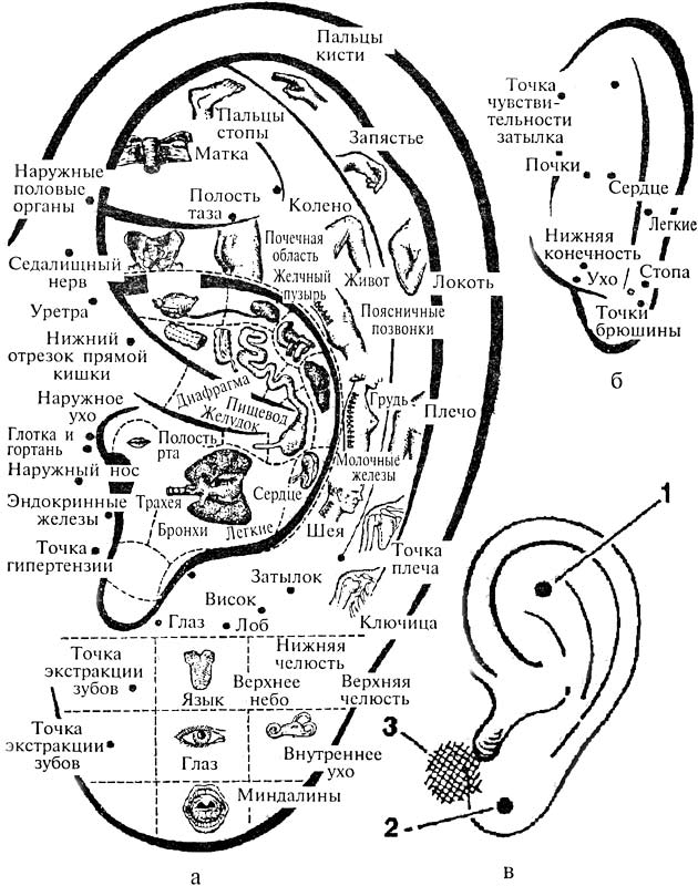 Проекция частей тела и