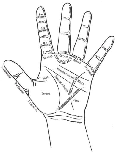 Основная схема руки
