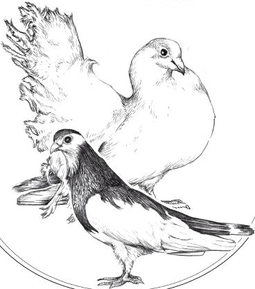 Все о голубях fb2 либрусек