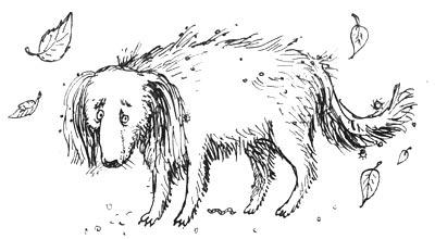 Желудок собаки