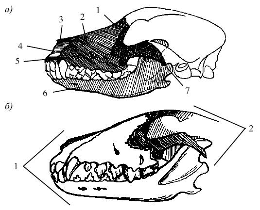 Отделы черепа собаки: а)