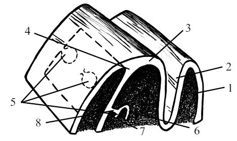 Рис. 6. Схема развития молочных зубов: 1 - губа, 2 - щечно-губная борозда, 3 - край нижней челюсти, 4...