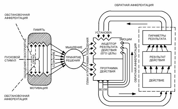 """Основной принцип, которому подчинено это взаимодействие.   """"В функциональных системах организма отклонение..."""