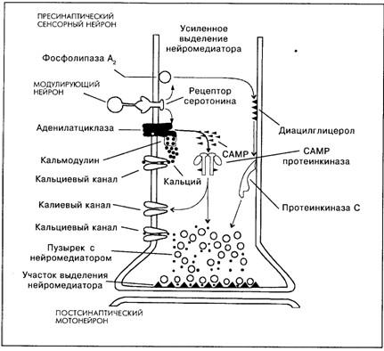 Основы психофизиологии (fb2) |