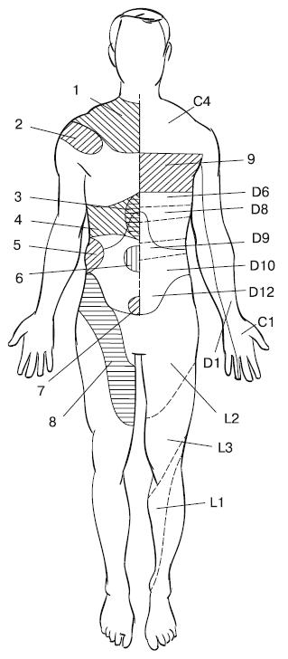 Деление тела на сегменты и