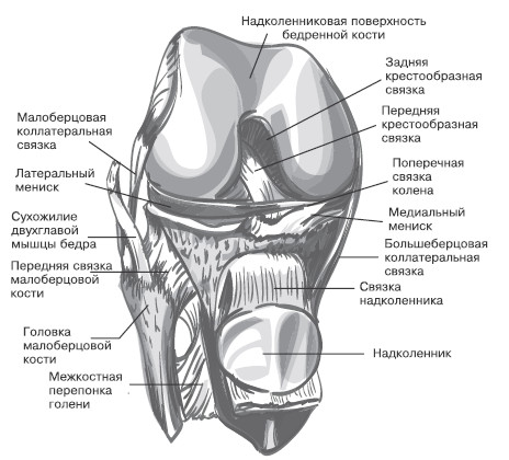 Правый коленный сустав, вид