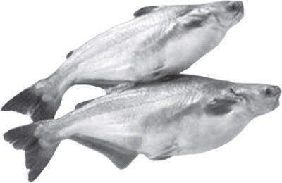 Помогите определить болезнь (Погиб пангасиус) - Наш аквариум