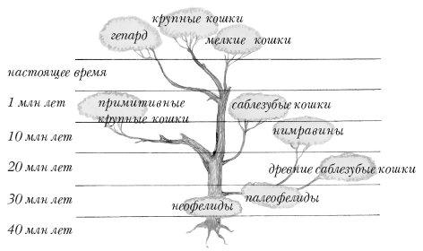 Родословное древо семейства