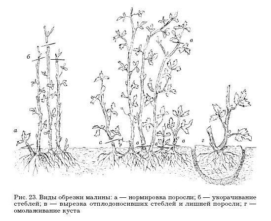 Садовые деревья и кустарники