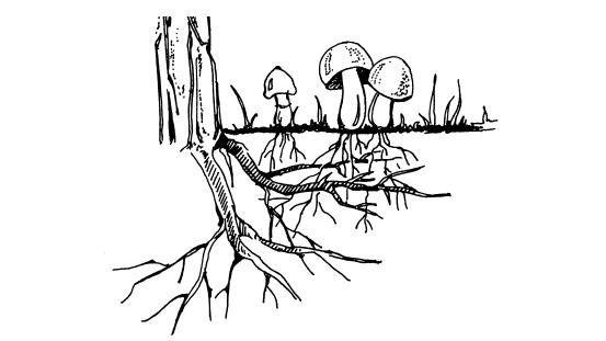 Для обеспечения грибов
