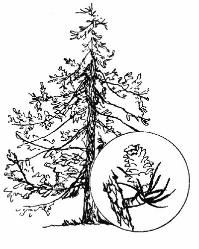 Обладают не только сами деревья
