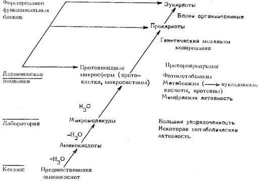 Уголев Александр. Теория