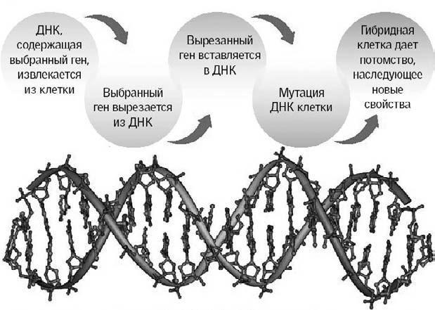 Удивительная генетика (fb2) |