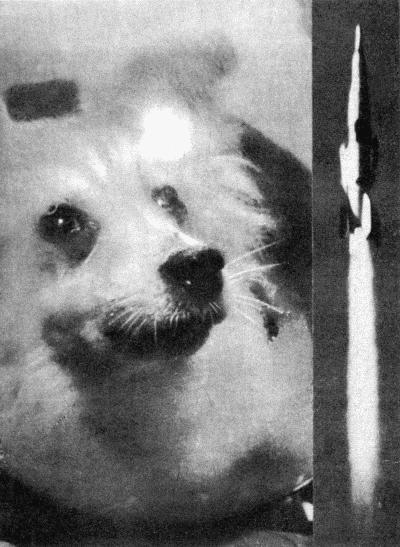 Журнал Новости Космонавтики - Собачки в космосе
