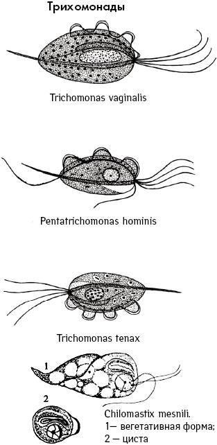 ингерлейб избавление от паразитов скачать