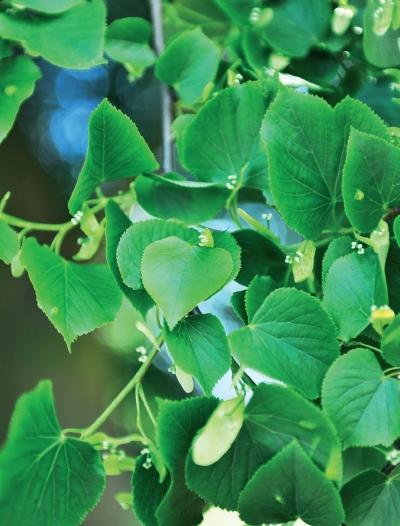 Миллион растений для вашего