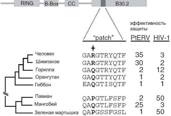 Обезьяны, кости и гены (fb2) |