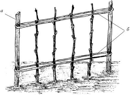 Устройство шпалеры: а — столб