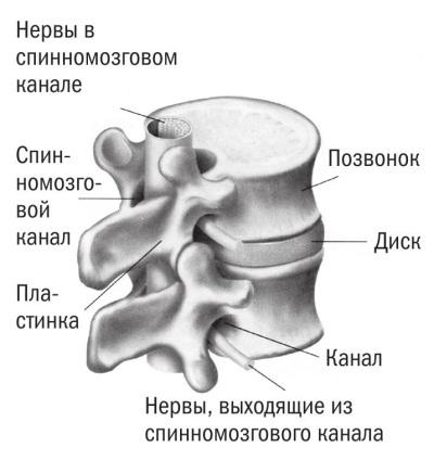 Метастаз позвоночника симптомы и лечение