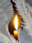 Аватар пользователя Evernet