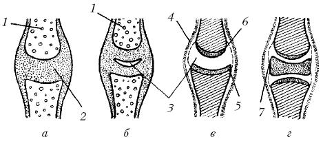 Строение суставов у собак эндоскопическая операция коленного сустава краснодар